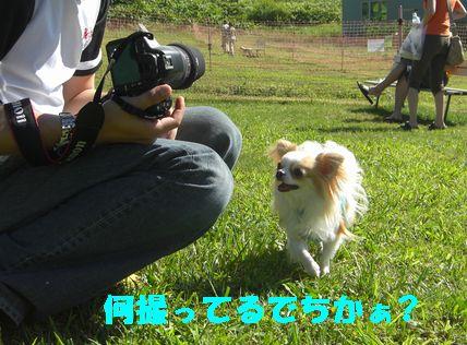 カメラ 11134689150