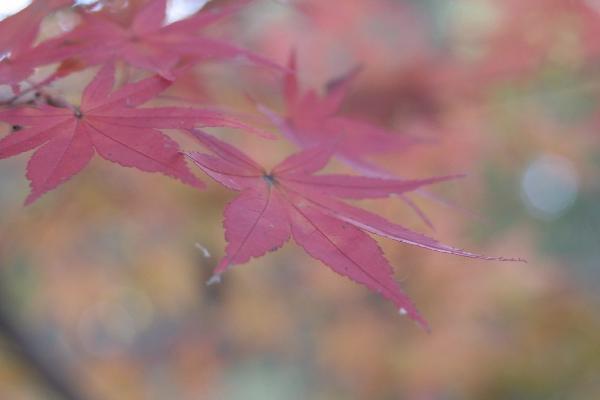 keyaki-001988s.jpg
