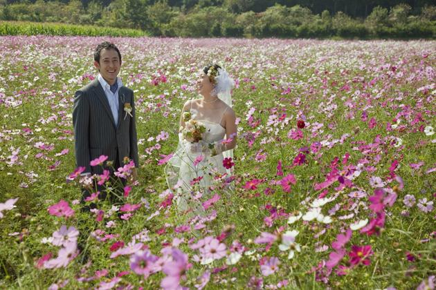 結婚式 ロケ前撮り コスモス畑