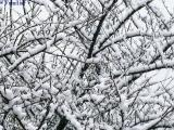 降り積もる雪に耐えてます