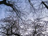 あっという間に桜も終わり・・・