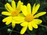 この花の周りには、ブンブン飛んでいる働き者が「早く撮ってどいてよ~」とせかしています。その正体は?