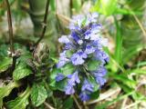 青紫のお花・・・なんて言う名前なんだろう?