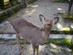 2007年12月27日~31日 京都奈良旅行 186