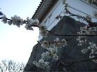 小田原城3