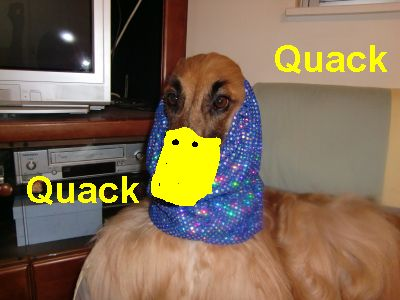 PO20091107_0012_duck.jpg