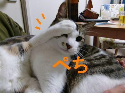 PO20091114_0011.jpg