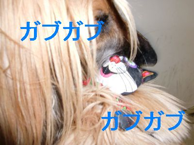 PO20091226_0014.jpg