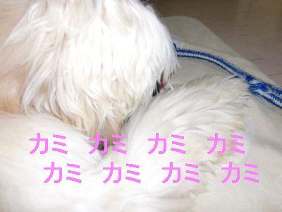 PO20100110_0221.jpg