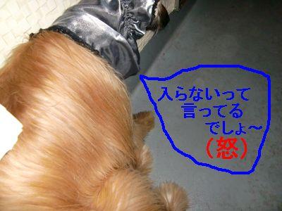 PO20100124_0009.jpg