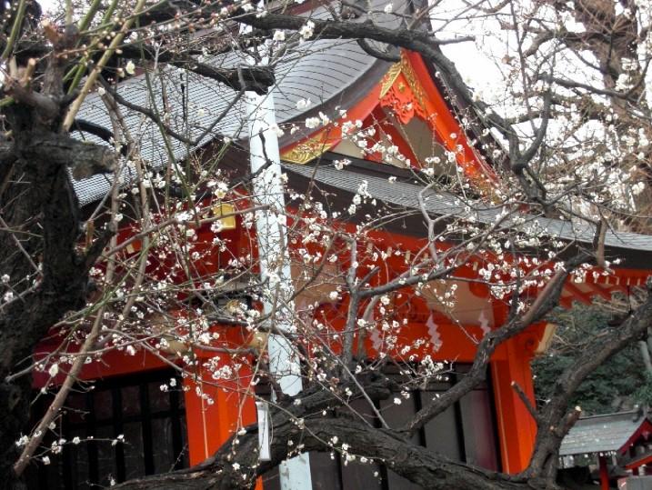 CIMG9997.花園神社梅JPG