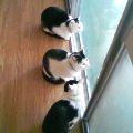 3猫小さい^^