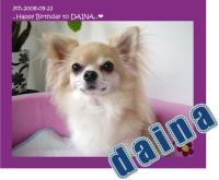 daina2008