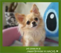 hachi2008