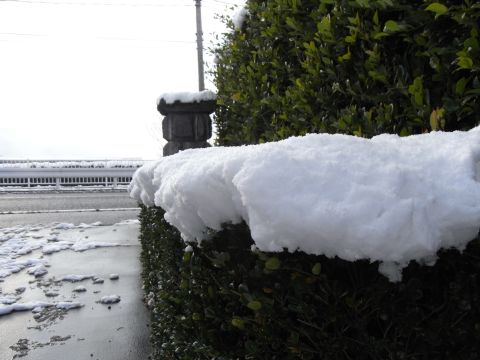 大雪(こちらではね)