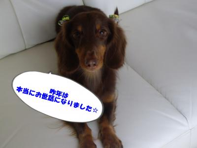 IMGP9736_convert_20100102173032.jpg