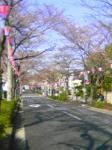 森孝の桜並木