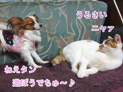 2008-01-01-002.jpg