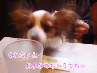 2008-01-12-024.jpg
