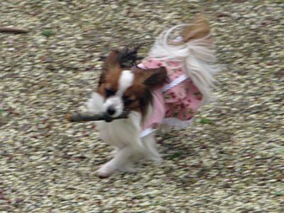 2008-04-19-003.jpg