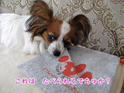 2008-05-19-007.jpg