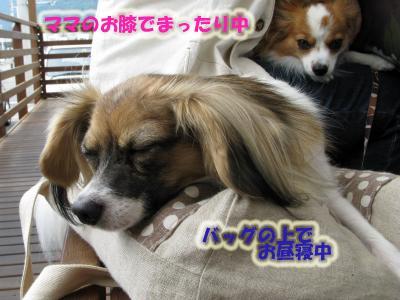 ぽぽちゃん&ドルくん