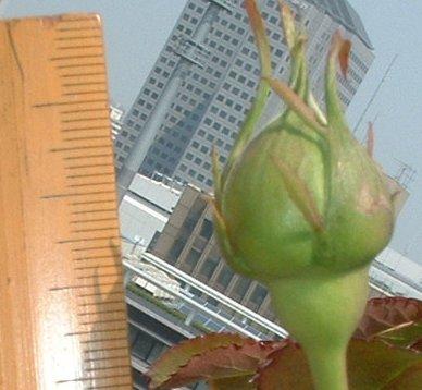 20080430ピエールの身長