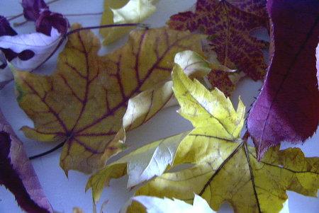 grape4.jpg