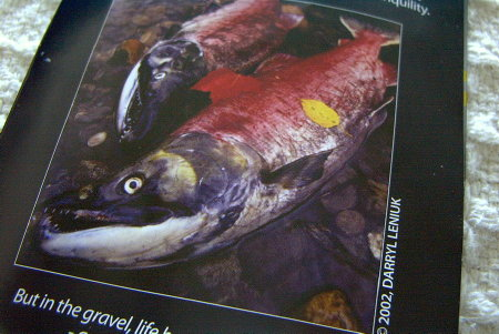 salmon6.jpg