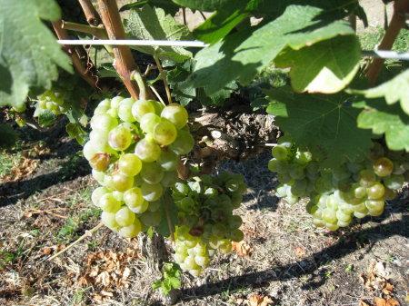 wineries01.jpg
