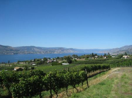 wineries06.jpg