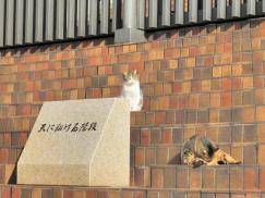 京都造形芸術大 天に翔ける階段