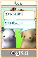 ペットの会話2