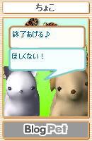 ペットの会話4