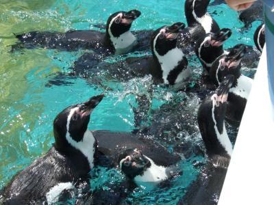 ペンギンにエサを