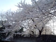20060401-03.jpg