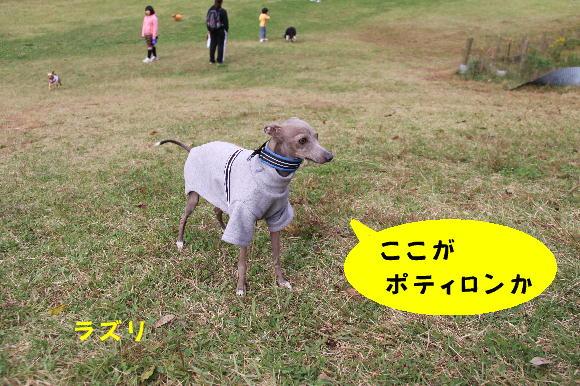 IMG_9288.jpg