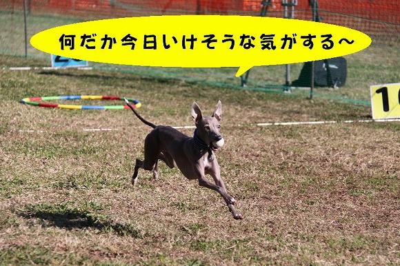 IMG_9846.jpg