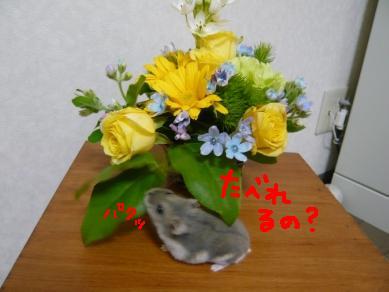 画像5(080515~) 052-3