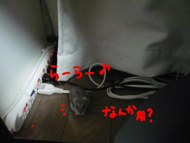 画像5(080515~) 762-7
