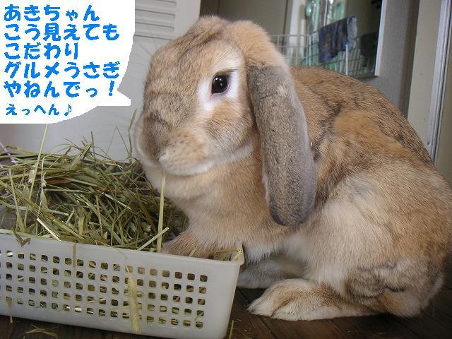 グルメ兔宣言の巻。