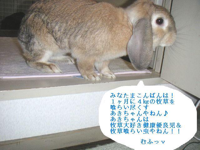 牧草を1ヶ月で4キロも喰らう兔・・・それがあきちゃん。