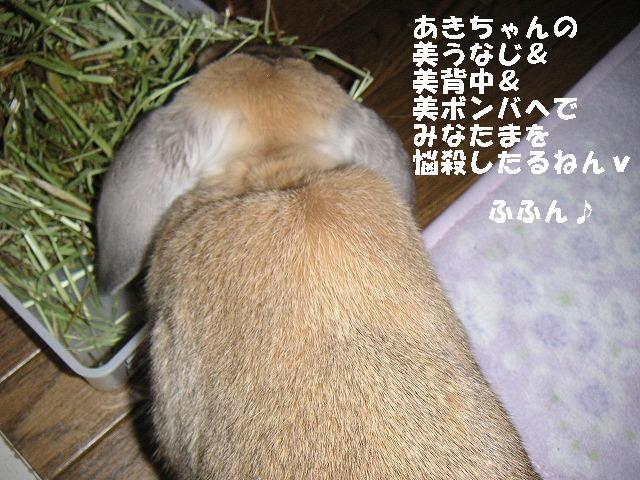 あきちゃん悩殺せくすぃ系を目指すの巻。