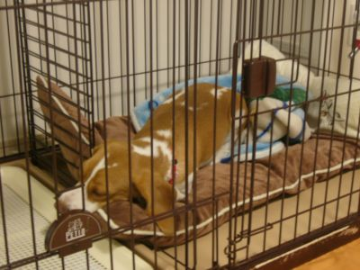 数ヶ月ぶりにゲージの中で、しかもマットの上で眠る小梅!