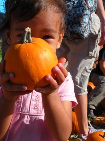 pumpkin-3.jpg