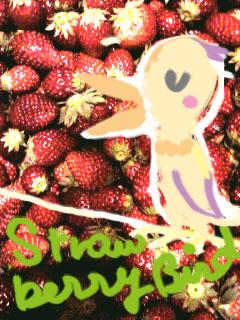 strawberrybird
