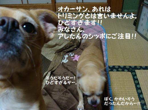 001hidosugimasu.jpg