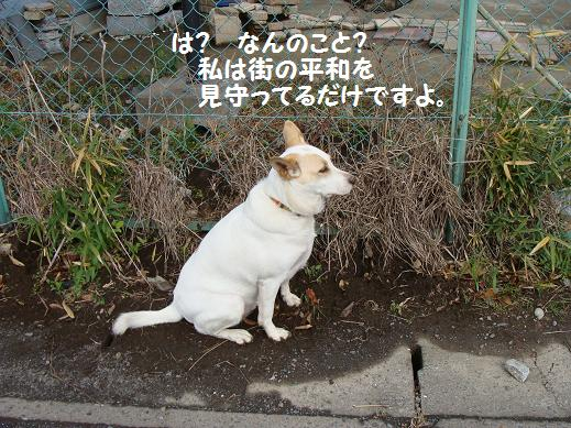 006matinoheiwa.jpg