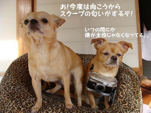 030syuyaku.jpg