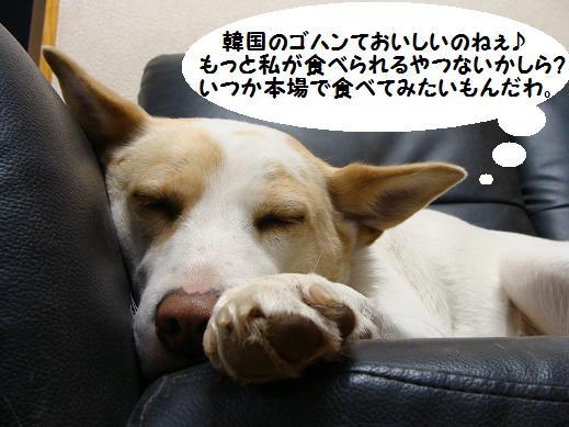 041syokugo.jpg
